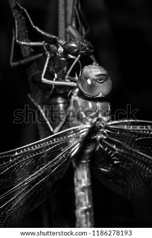 Dragonfly and monochromatic fantasy.  #1186278193