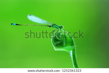dragonfly,damselfly,damselflies,stage,macro,animals.wild,insects,green,leaf,fly,fauna
