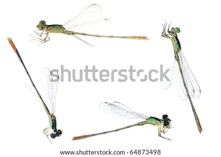 Dragonfly damselfly frame isolated on white