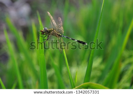 dragonfly eat insects on green leaves #1342057331