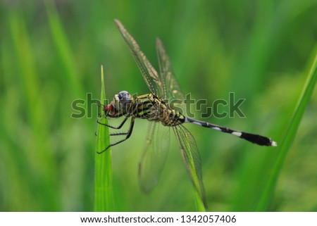 dragonfly eat insects on green leaves #1342057406