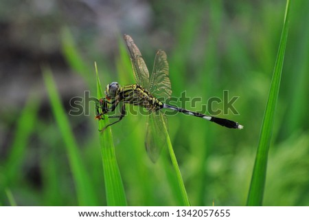 dragonfly eat insects on green leaves #1342057655