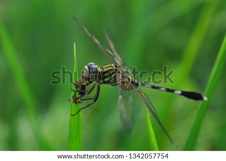 dragonfly eat insects on green leaves #1342057754