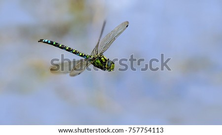 dragonfly in flight over a...
