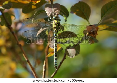 dragonfly in nature in the sunlight