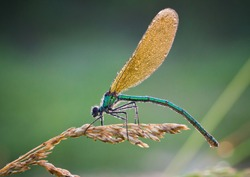 Dragonfly in the Morning