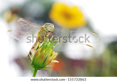 dragonfly is standing on the flower bud