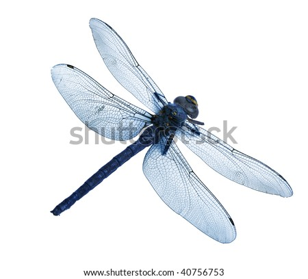 dragonfly isolated high quality - stock photo