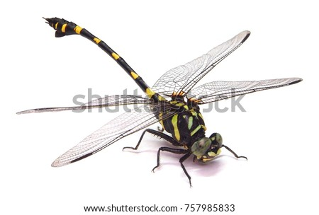 Dragonfly isolated on white background.