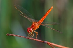 Dragonfly, Macro dragonfly, dragonfly , insect, animal, nature,macro,bug.