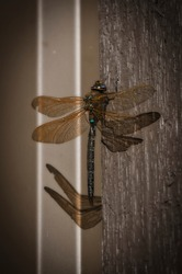 Dragonfly on a metal wall