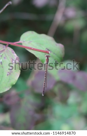 Dragonfly on a plant #1146914870