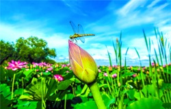 Dragonfly on flower bud on blue sky background