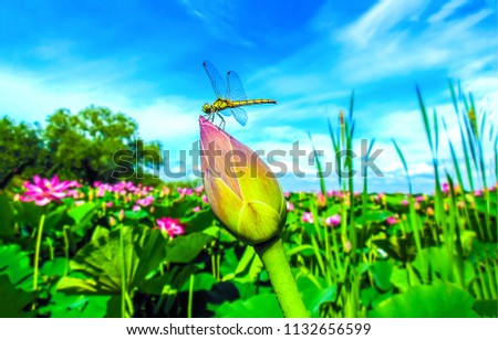 Dragonfly on flower bud on summer meadow flowers . Dragonfly macro photo. Dragonfly flower view