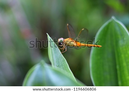 Dragonfly on Isolated background #1196606806