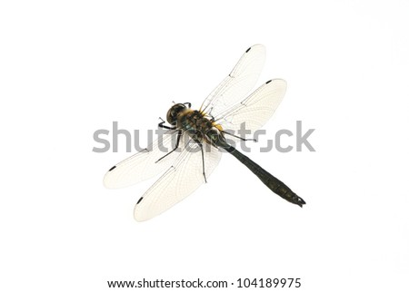 Dragonfly on the white background.