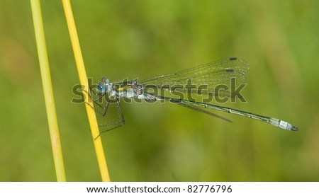 dragonfly outdoor