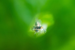 Dragonfly sits on a green blade of grass close-up. Macro photo. The concept of summer, insects. Copyspace.