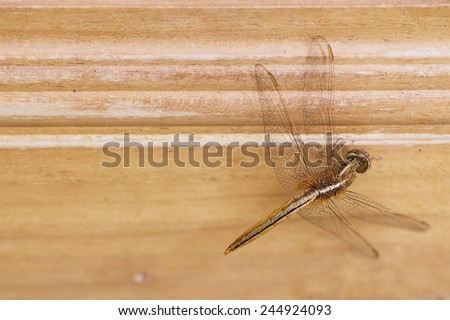 Dragonfly sits on wooden #244924093