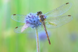dragonfly sitting on a flower