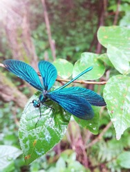 dragonfly sitting on a leaf in the forest