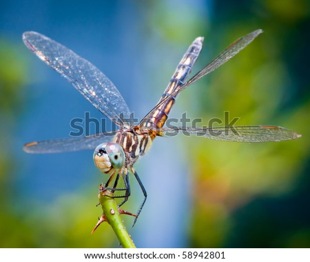 Dragonfly spreads wings