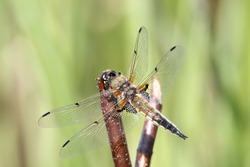 Dragonfly still on branches or grass
