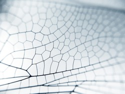 Dragonfly wing close up background with zoomed transparent lattice or macro chitin net
