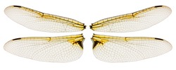 Dragonfly wings isolated