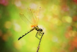 Dragonfly with color  background