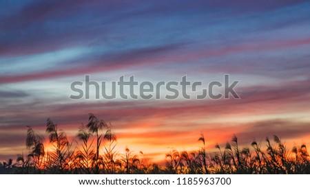 Free Photos Sky Wallpaper Beautiful Sunsetsunrise Background