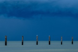 Dramatic blue hour seascape with seagulls on a pole