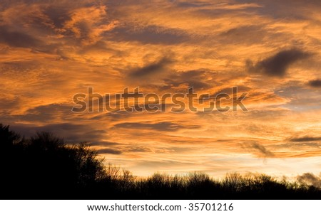 Dramatic clouds turn a peachy colour at sunset over a bare treeline