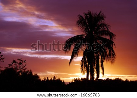 Dramatic colors in the tropical sky at sunset with a silhouette of a palm tree - stock photo