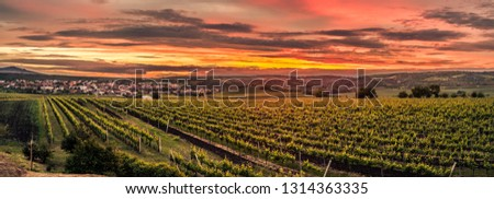 Dramatic evening with many vineyards in area around Velké Pavlovice called Modré hory, South Moravia, Czech Republic with view of Pálava. #1314363335
