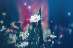Dramatic flower background; Nature Background