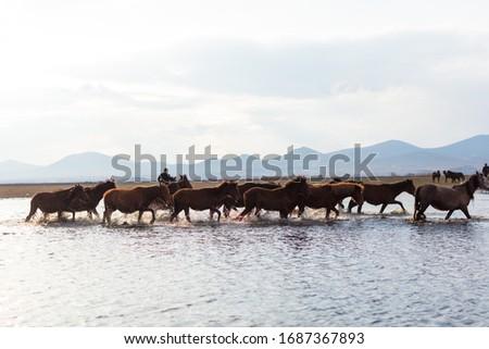 Dramatic landscape of wild horses running in dust. Horses (Yilki Atlari) live in Hurmetci Village, between Cappadocia and Kayseri, Central Anatolian region of Turkey. Stok fotoğraf ©