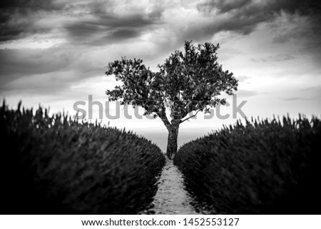 Dramatic lonely tree. Loneliness and