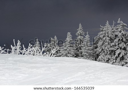 Dramatic mountain winter landscape with fir trees covered with snow and dark sky