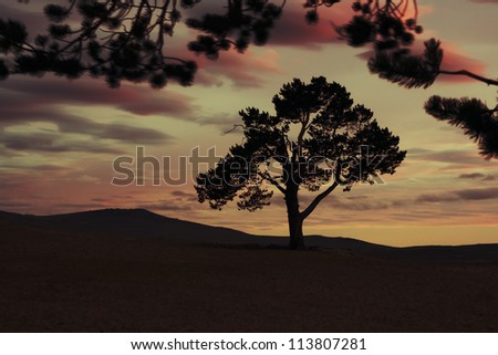Dramatic red, purple, and yellow sky with clouds, sunset with silhouette tree