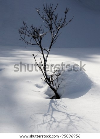 Dramatic shadows of a stark branch in the snow.
