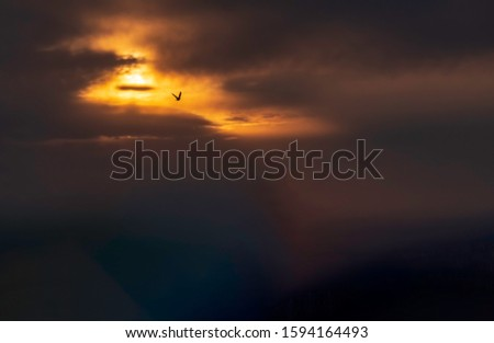 Dramatic silhouette of lone bird in flight along an illuminated portion of darkening evening sky, for concepts such as instinct and action, freedom and self-reliance, chance and risk