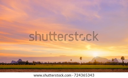 dramatic sky and landscape of rice field at Phatthalung Thailand.