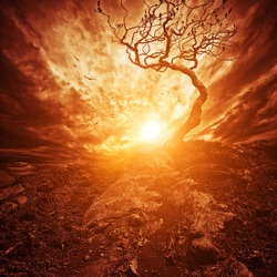 Dramatic sunset over old lonely tree