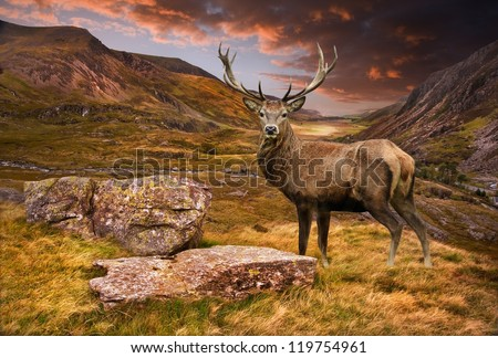 Dramatic sunset with beautiful sky over mountain range giving a strong moody landscape and red deer stag looking strong and proud