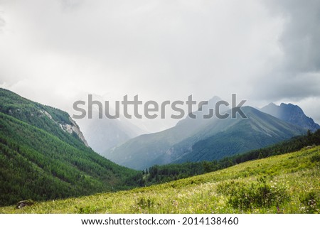 Dramatic vivid mountain landscape with green forest under pointed peak among rainy low clouds. Scenic alpine view to sharp mountain pinnacle under cloudy sky in overcast weather. Mountains scenery. Photo stock ©