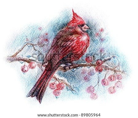 drawing of a red bird on a branch in winter - snowy scene