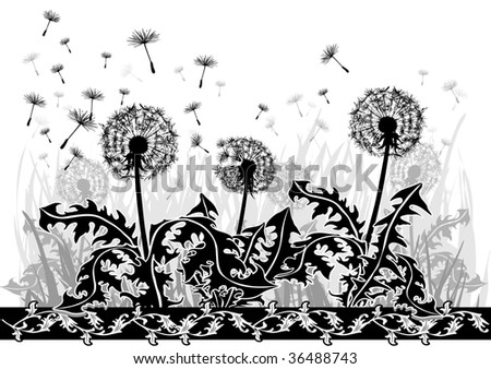 stock photo Drawing of dandelions in black and white