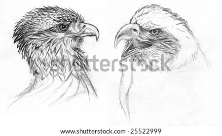 Eagle Eye Pencil Drawing Drawing of Two Eagles Pencil