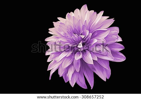Drawing oil painting dahlia flower on a black background